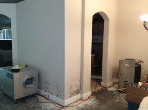 Mold Removal Tampa FL